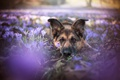 Picture each, flowers, dog
