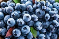 Picture blueberries, fresh, blueberries, berries, berries, blueberry