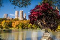 Picture USA, pond, autumn, branches, the sun, New York, boats, the bushes, trees, home, Park